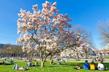 Magnolienblüte in Stuttgart – Schlosspark